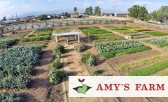 Enjoy a Tour of Amy's Farm