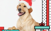 It's Time for You and Your Furry Best Friend to Shine for this Holiday Season!