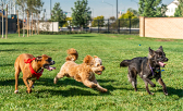 New Dog Park will be the Perfect Place to Ruff it!